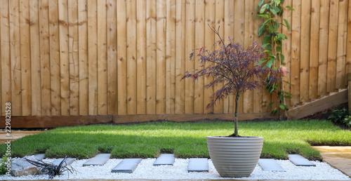 Photo Contemporary garden with acer
