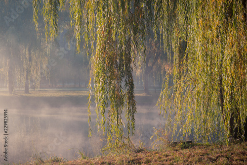 Photo Weeping willow branches hang down over the water on the bank of the river in the