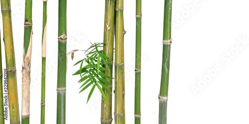 green short bamboo isolated