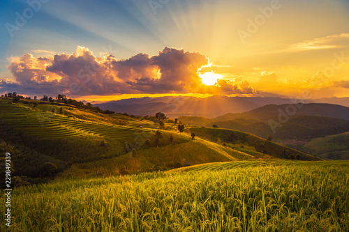 Fotobehang Rijstvelden sunset landscape view at green terraced rice field in Pa Pong Piang , Mae Chaem, Chiang Mai, Thailand .