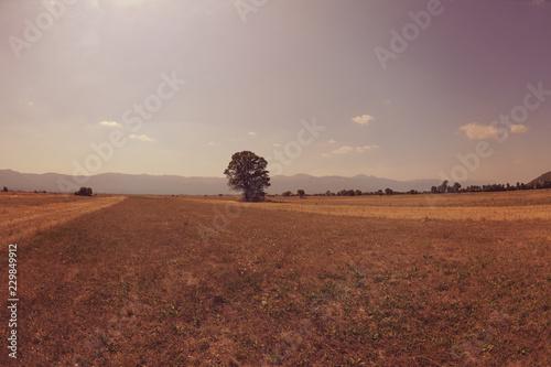 Tuinposter Diepbruine summer landscape