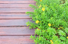 Green Plant Climber With Yellow Flowers Growing Over And Concrete Walkway In Plank Patterns Texture For Natural Background