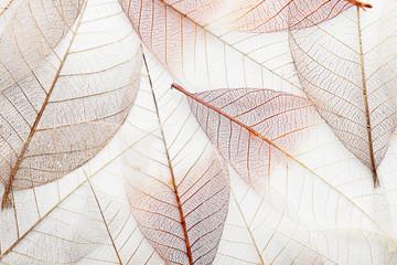 Pogled odozgo na lijepe ukrasne listove kostura