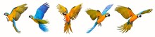 Set Of Macaw Parrot Isolated O...