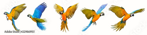 Foto auf Leinwand Vogel Set of macaw parrot isolated on white background