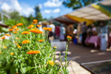 Orange Flowers At The Farmer's Market With Blurry People And Food Stalls In The Background - 1/2 - Closeup Picture With Vibrant Colors, Taken Outside In A French Canadian Farmer's Market