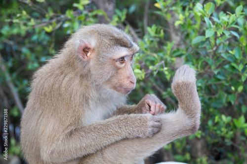 Foto op Plexiglas Aap monkey