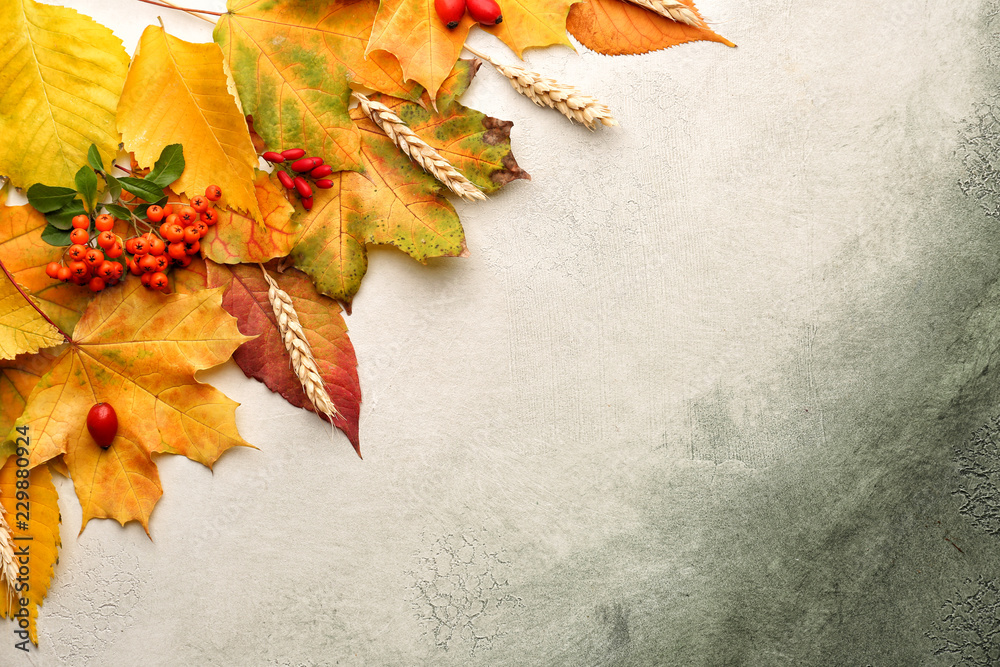 Fototapety, obrazy: Composition with autumn leaves on color background