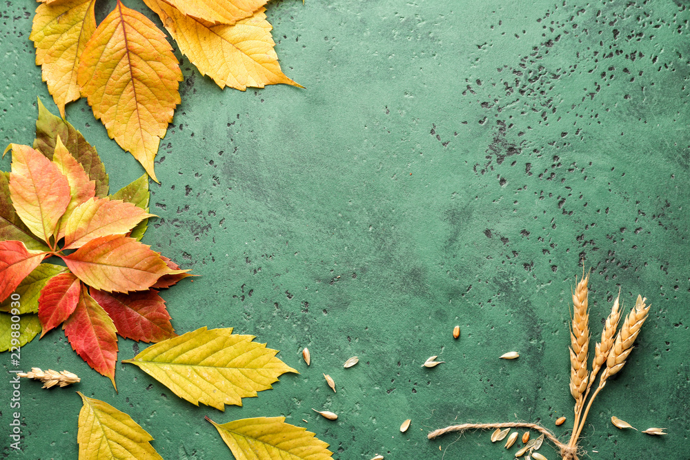 Fototapety, obrazy: Beautiful autumn leaves with wheat ears on color background