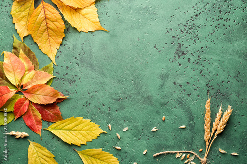 Beautiful autumn leaves with wheat ears on color background