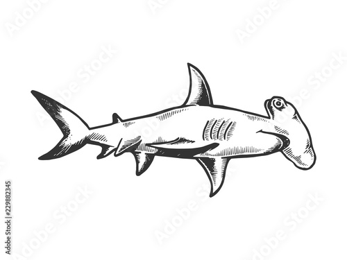 Obraz Great hammerhead shark fish animal engraving vector illustration. Scratch board style imitation. Black and white hand drawn image. - fototapety do salonu