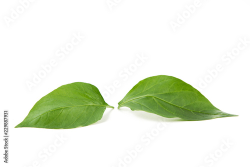 Zielony liść na białym tle - fototapety na wymiar