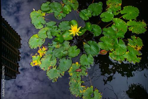 Fotografering  fiori