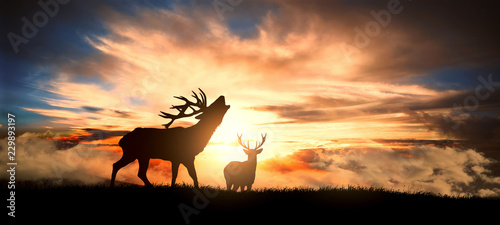 Poster Chasse deers at sunset