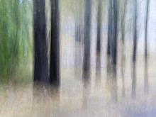 Blurred Tree Trunks At A City ...