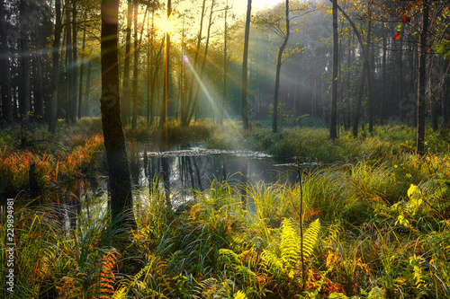 Fototapeta premium jesień na Mazurach