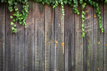 Vichy Grapes On An Old Wooden Wooden Fence With Faded Paint