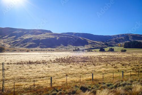 Poster Oceanië Mountain fields landscape in New Zealand