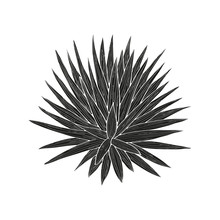 Yucca. Plant. Black Silhouette On White Background.
