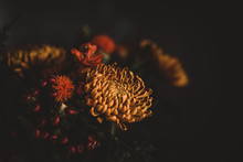 Dark And Moody Autumnal Flowers