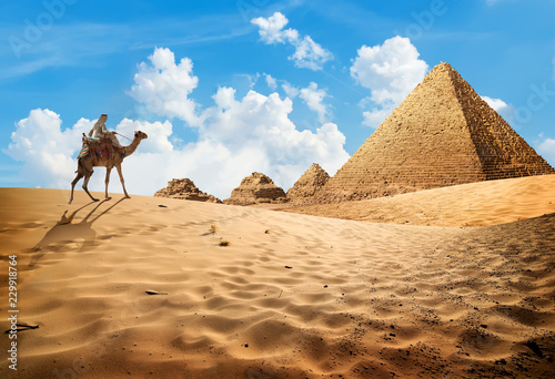 Cadres-photo bureau Egypte Camel near pyramids