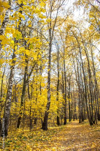 Fotobehang Honing Warm golden autumn