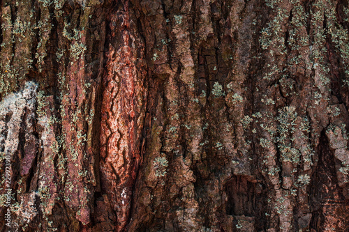 Texture Of A Tree Trunk With Natural Patterns Close Up