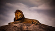 canvas print picture - lion on a background of blue sky