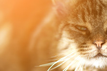 Closeup Of A Domestic Cat With Beautiful Green Eyes Looking At The Camera