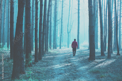 silhouette of a single man in the pine forest in the early