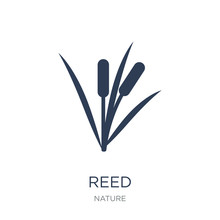 Reed Icon. Trendy Flat Vector Reed Icon On White Background From Nature Collection