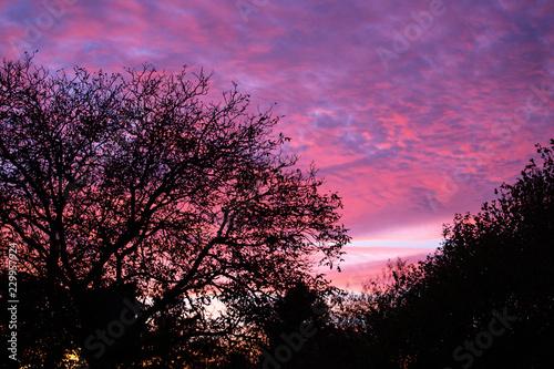 In de dag Candy roze Pink sunset