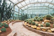 Tropical Botanical Garden Cactus