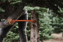 Man Cutting Down Christmas Tree