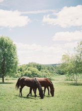 Summertime At The Horse Ranch