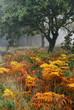 Tree and autumnal bracken in fog. Norfolk, UK.