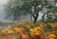 Tree And Autumnal Bracken In F...