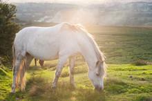 White Horse Grazing On Grassy Landscape