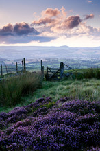 Heather Covered Moorland At Sunset
