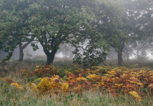 Tree And Autumnal Bracken In F...