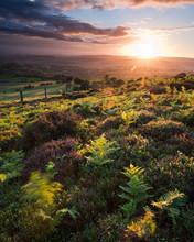 Heathland At Sundown