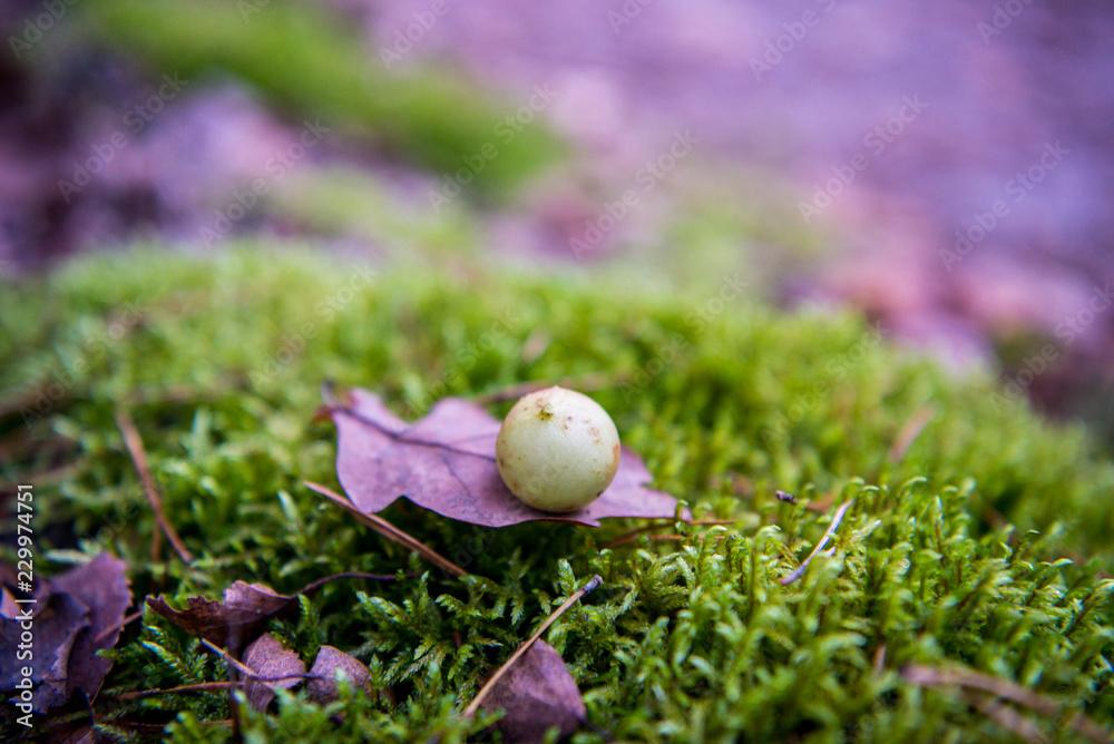 Fototapeta wrzosowy liść na mchu