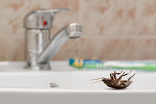 Dead Cockroach On The Sink On ...