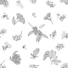 Seamless Pattern Of Hand Drawn Sketch Style Autumn Plants Isolated On White Background. Vector Illustration.