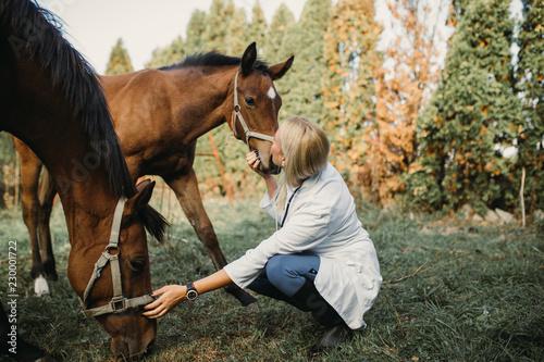 Slika na platnu Veterinarian with horses outdoors in nature.