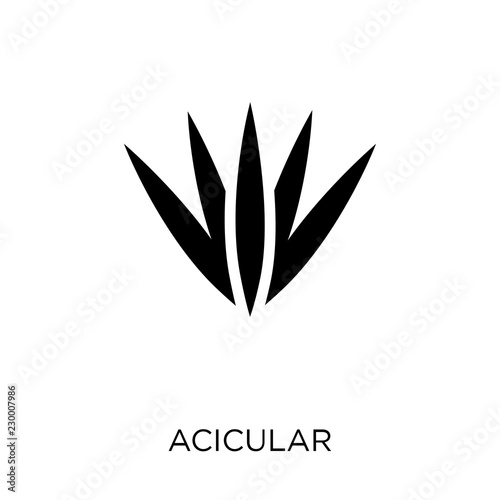 Photo Acicular icon. Acicular symbol design from Nature collection.