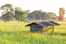 Old Hut In Green Rice Field With Sunlight In The Morning, Nakhonratchasima, Thailand