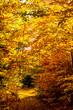 Fall colors, trees and foliage
