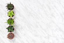 Row Of Succulent Plants On Marble Background