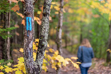 Person Walking In Woods In Autumn Along Marked Trail